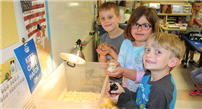 Hatched Science Lessons Photo